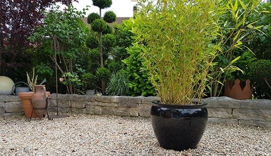 Grün-Stich Gartenbau - Steingarten mit Trockenmauer und Topfpflanze