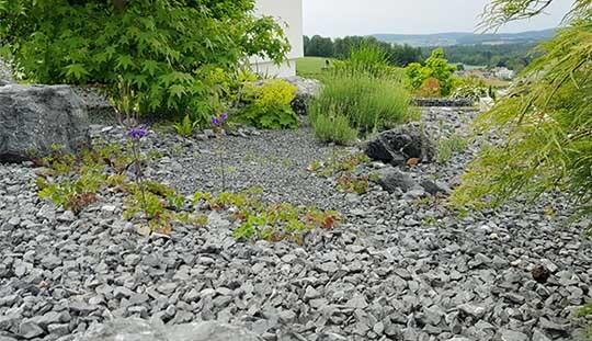 Grün-Stich Gartenbau - Steingarten mit grünen Pflanzen